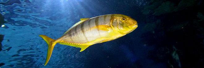 Тропические рыбы будапештского Тропикариума